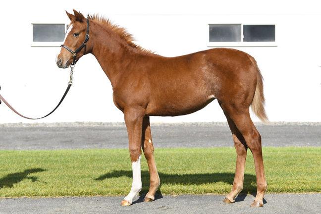 【ギンザヴィクトリアの20】(牝)~血統診断-馬場・距離適性-~ローレルクラブ