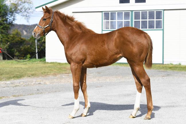【ゼフィランサスの20】(牝)~血統診断-馬場・距離適性-~ローレルクラブ
