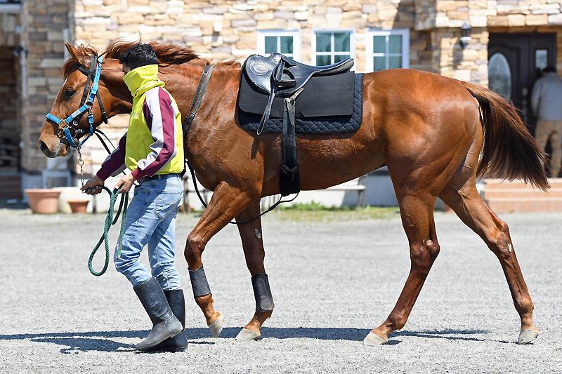 【アニージョ】(牡)~血統診断-馬場・距離適性-~アニムスの19-ローレルクラブ